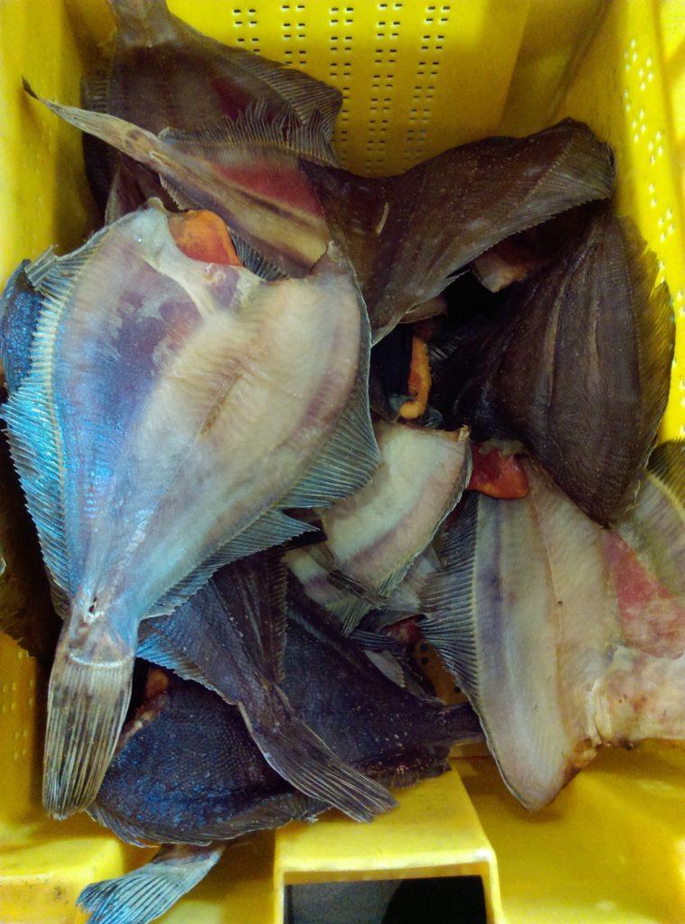 владивосток рыбалка на красную рыбу